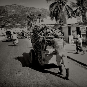 Cut cane going to market
